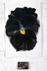 Ann Craven, 01_Pansy (Guilford, Black Moon Pansy, 2-10-13 #1), 2013, 17 x 11 in_JPEG