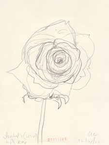 Ann Craven_Flower (Isabel's LA Rose, 12-31-11, 410PM), 2011