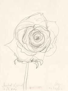 Ann Craven_Flower (Isabel's LA Rose, 12-31-11, 410PM), 2011